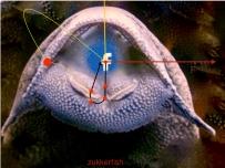 zukkerfish-001